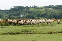 Gower Salt Marsh Lamb - Image for £200 large selection box